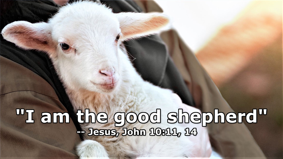 "The Good Shepherd.  Photo Copyright David Padfield.  Used under license.  Jesus said, ""I am the good shepherd"" (John 10:11, 14).  Jesus told a parable about a good shepherd who went searching for one of his sheep that was lost (Luke 15:1-7).  Jesus said, ""For the Son of Man has come to seek and to save that which was lost"" (Luke 19:10)."